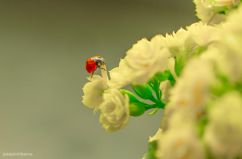 Ladybug 2016 - low-1